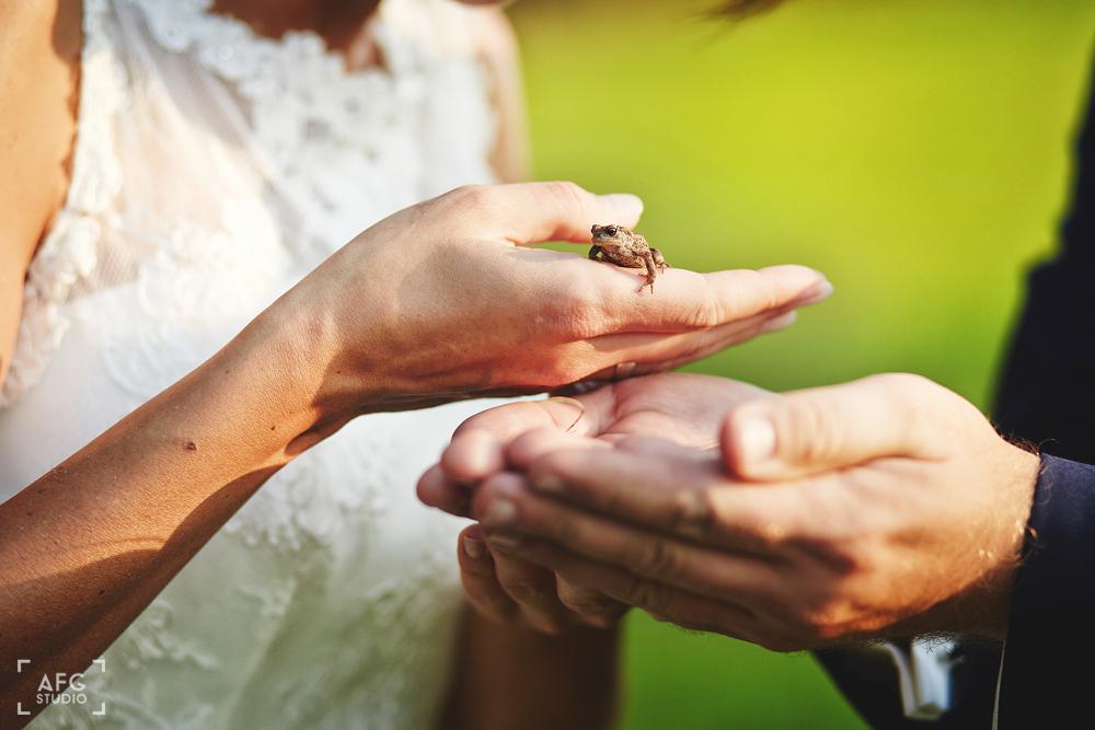 żaba, para młoda, plener ślubny