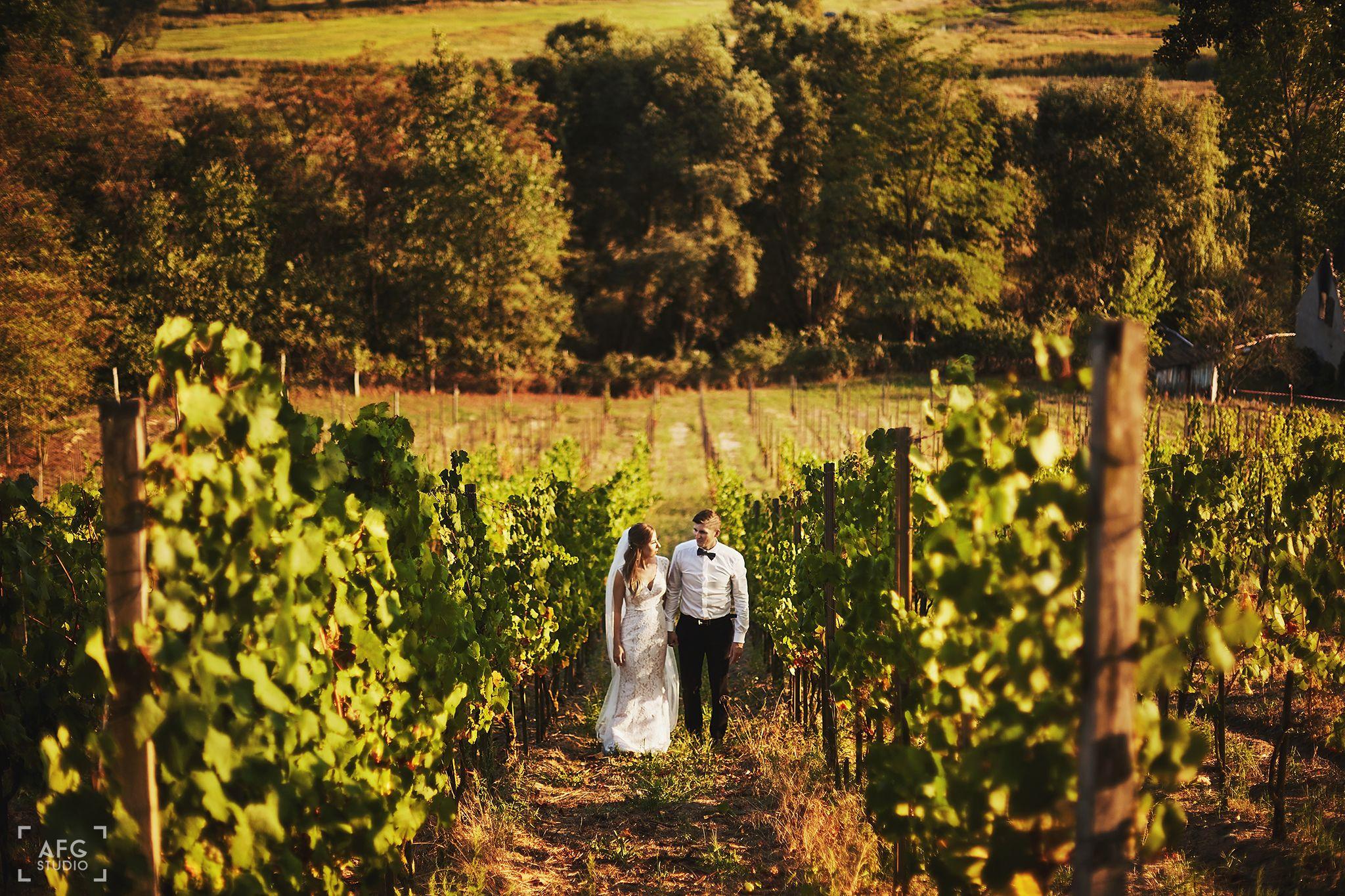 suknia ślubna, para młoda, winnica