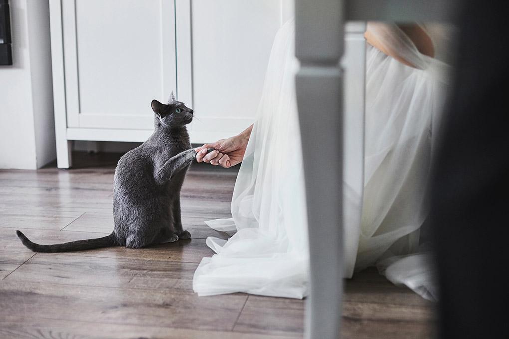 kot, suknia ślubna